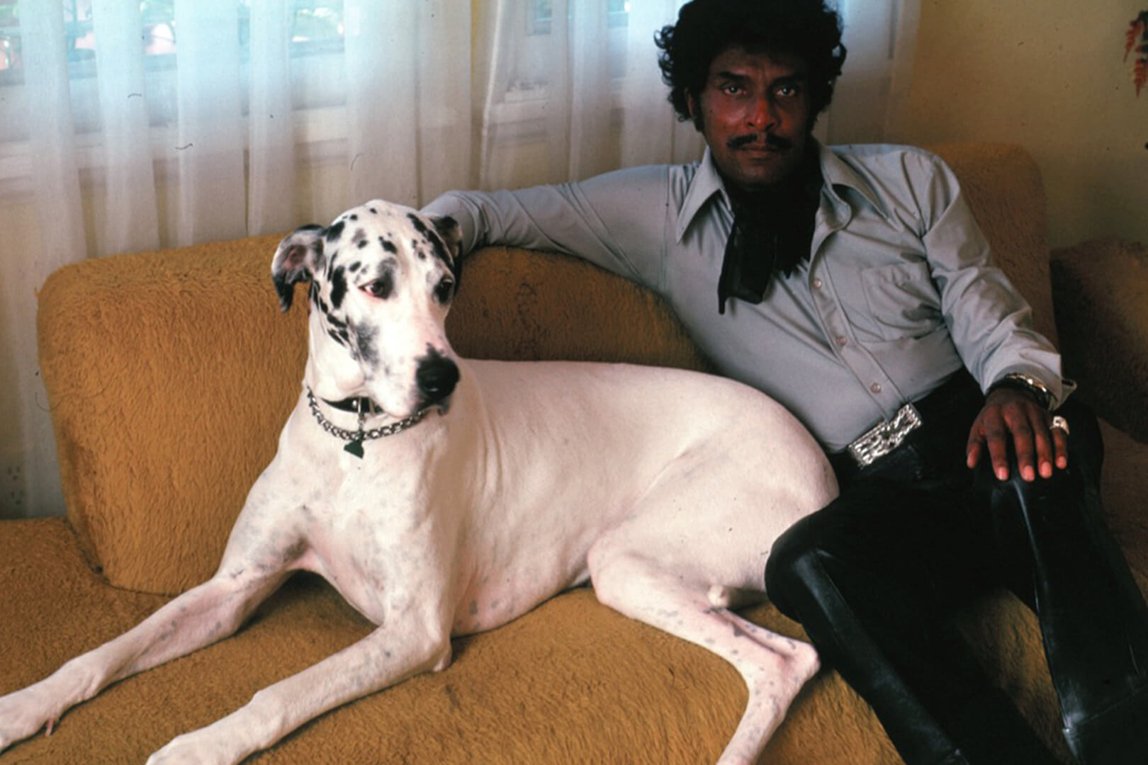 iceberg slim dog